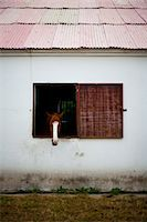 Horse Looking Out of Stable Window Stock Photo - Premium Rights-Managednull, Code: 822-05948378
