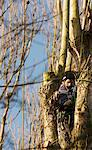 Tree Surgeon Working on Tree Stock Photo - Premium Rights-Managed, Artist: ableimages, Code: 822-05948547