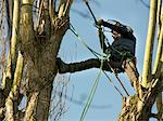 Tree Surgeon Working on Tree Stock Photo - Premium Rights-Managed, Artist: ableimages, Code: 822-05948571