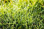 Grass Blades and Dew Drops, Close up view Stock Photo - Premium Rights-Managed, Artist: ableimages, Code: 822-05948722