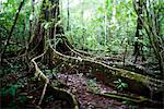 The Roots of a Tree in the Rainforest, Costa Rica Stock Photo - Premium Rights-Managed, Artist: ableimages, Code: 822-05948794