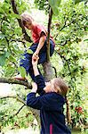 Children picking fruit in tree Stock Photo - Premium Royalty-Freenull, Code: 649-05949471