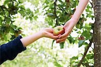 single fruits tree - Children picking fruit in tree Stock Photo - Premium Royalty-Freenull, Code: 649-05949473