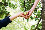 Children picking fruit in tree