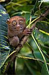 Small monkey perched in tree Stock Photo - Premium Royalty-Free, Artist: Robert Harding Images, Code: 649-05950443