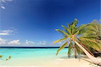 paradise (place of bliss) - Palm trees growing on tropical beach Stock Photo - Premium Royalty-Freenull, Code: 649-05950446