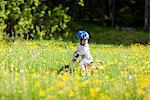 Boy cycling in meadow Stock Photo - Premium Royalty-Free, Artist: Ascent Xmedia, Code: 6102-05955879