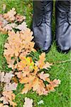 High angle view of autumn leaves on ground Stock Photo - Premium Royalty-Free, Artist: CulturaRM, Code: 698-05957292