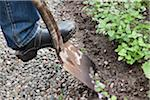 Person digging with spade Stock Photo - Premium Royalty-Free, Artist: dikti                         , Code: 698-05957302