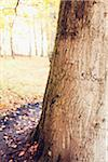 Tree trunk with text Stock Photo - Premium Royalty-Free, Artist: Ikon Images, Code: 698-05958021