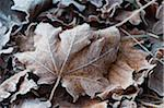 Close-up of frosty leaf Stock Photo - Premium Royalty-Free, Artist: Water Rights, Code: 698-05958673
