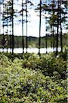 Forest glade in front of lake Stock Photo - Premium Royalty-Free, Artist: Robert Harding Images, Code: 698-05958988