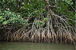 Mangroves, Port Douglas, Queensland, Australia, Pacific Stock Photo - Premium Rights-Managed, Artist: Robert Harding Images, Code: 841-05960529