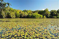 queensland - Keating's Lagoon, Cooktown, Queensland, Australia, Pacific Stock Photo - Premium Rights-Managednull, Code: 841-05960833
