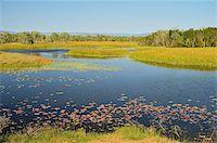 queensland - Tyto Wetlands, Ingham, Queensland, Australia, Pacific Stock Photo - Premium Rights-Managednull, Code: 841-05960870