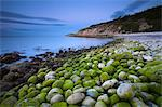 Algae covered pebbles at Church Ope Cove at dawn Portland, Jurassic Coast, UNESCO World Heritage Site, Dorset, England, United Kingdom, Europe Stock Photo - Premium Rights-Managed, Artist: Robert Harding Images, Code: 841-05962105