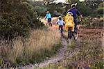 Family cycling along heathland tracks at sunset, Holt Heath, Dorset, England, United Kingdom, Europe Stock Photo - Premium Rights-Managed, Artist: Robert Harding Images, Code: 841-05962240