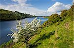 Hawthorn tree in blossom beside Meldon Reservoir, Dartmoor National Park, Devon, England, United Kingdom, Europe Stock Photo - Premium Rights-Managed, Artist: Robert Harding Images, Code: 841-05962628