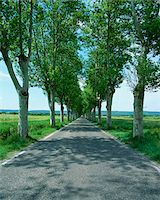 forever - Trees lining rural road Stock Photo - Premium Royalty-Freenull, Code: 635-05972211