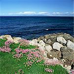 Flowers growing near rocky beach Stock Photo - Premium Royalty-Free, Artist: IIC, Code: 635-05972734