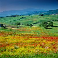 scenic and spring (season) - Rolling hills in rural landscape Stock Photo - Premium Royalty-Freenull, Code: 635-05972796