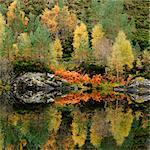 Autumn trees reflected in still lake Stock Photo - Premium Royalty-Freenull, Code: 635-05972861