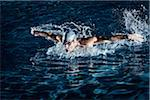 Swimmer, Jupiter, Palm Beach County, Florida, USA Stock Photo - Premium Royalty-Free, Artist: Peter Barrett, Code: 600-05973053
