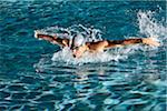 Swimmer, Jupiter, Palm Beach County, Florida, USA Stock Photo - Premium Royalty-Free, Artist: Peter Barrett, Code: 600-05973055