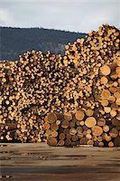 Logs, Merritt, Nicola Country, British Columbia, Canada Stock Photo - Premium Royalty-Freenull, Code: 600-05973357