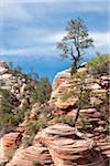 Trees and Rock Formations, Zion National Park, Utah, USA Stock Photo - Premium Rights-Managed, Artist: Siephoto, Code: 700-05973485