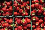 Harvested Strawberries, DeVries Farm, Fenwick, Ontario, Canada Stock Photo - Premium Royalty-Free, Artist: Michael Mahovlich, Code: 600-05973554