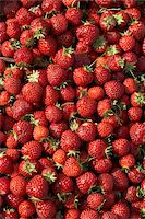 strawberries - Harvested Strawberries, DeVries Farm, Fenwick, Ontario, Canada Stock Photo - Premium Royalty-Freenull, Code: 600-05973563