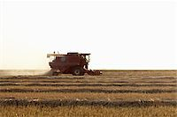 Axial-Flow Combine Harvesting Wheat in Field, Starbuck, Manitoba, Canada Stock Photo - Premium Rights-Managednull, Code: 700-05973568