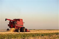 Axial-Flow Combines Harvesting Wheat in Field, Starbuck, Manitoba, Canada Stock Photo - Premium Rights-Managednull, Code: 700-05973570