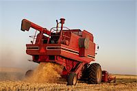 Axial-Flow Combines Harvesting Wheat in Field, Starbuck, Manitoba, Canada Stock Photo - Premium Rights-Managednull, Code: 700-05973572