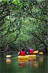 Kayaking at Kuroshio No Mori, Mangrove Park, Amami Oshima, Amami Islands, Kagoshima Prefecture, Japan Stock Photo - Premium Rights-Managed, Artist: R. Ian Lloyd, Code: 700-05974002