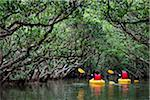 Kayaking at Kuroshio No Mori, Mangrove Park, Amami Oshima, Amami Islands, Kagoshima Prefecture, Japan Stock Photo - Premium Rights-Managed, Artist: R. Ian Lloyd, Code: 700-05974004