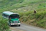 Grizzly bear sow sits on a side hill close to the road and watches a green shuttle bus near Stony Hill, Denali National Park & Preserve, Interior Alaska, Summer Stock Photo - Premium Rights-Managed, Artist: AlaskaStock, Code: 854-05974375