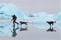 quest - Man ice skating at Sheridan Glacier with two dogs reflecting in thin layer of water on ice and icebergs in the background, Cordova, Southcentral Alaska, Winter Stock Photo - Premium Rights-Managednull, Code: 854-05974492