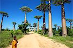 A dirt road on either side of Adansonia grandidieris, Avenue of the Baobabs, Madagascar Stock Photo - Premium Royalty-Free, Artist: Andrew Kolb, Code: 682-05977110