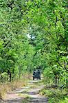Miombo woodland, fresh and green, North Kafue National Park, Zambia Stock Photo - Premium Royalty-Free, Artist: AWL Images, Code: 682-05977389