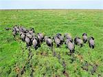 Elephant herd in swampland, Shambe Game Reserve west of the Nile, Republic of South Sudan Stock Photo - Premium Royalty-Free, Artist: CulturaRM, Code: 682-05977397