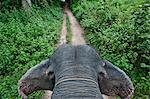 First person view of riding elephant in forest in Pai, Northern Thailand, Thailand. Stock Photo - Premium Royalty-Free, Artist: ableimages, Code: 682-05977433