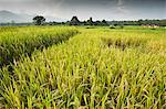 View of rice paddy field  in Pai, Northern Thailand, Thailand. Stock Photo - Premium Royalty-Free, Artist: Robert Harding Images, Code: 682-05977437