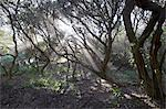 Rays of sunshine beaming between trees, Sandy Bay, Western Cape, South Africa Stock Photo - Premium Royalty-Free, Artist: Water Rights, Code: 682-05977725