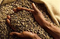 green coffee beans Stock Photo - Premium Rights-Managednull, Code: 825-05985468