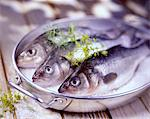 bass in coarse sea salt Stock Photo - Premium Rights-Managed, Artist: Photocuisine, Code: 825-05987636