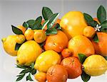 Citrus fruit Stock Photo - Premium Rights-Managed, Artist: Photocuisine, Code: 825-05988429