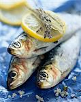 Sardines Stock Photo - Premium Rights-Managed, Artist: Photocuisine, Code: 825-05989889