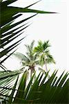 Palm trees Stock Photo - Premium Royalty-Free, Artist: IIC, Code: 632-05992047